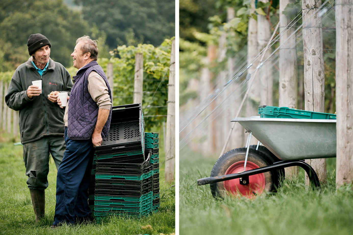 English vineyard images from a Bristol based food and drink photographer